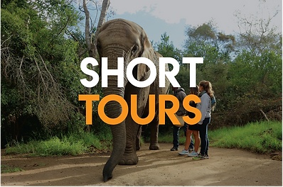 Short tours in South Africa
