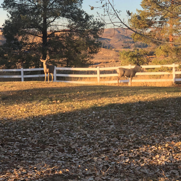 Deer Sanctuary