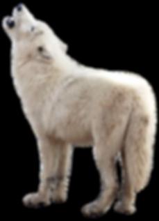 purepng.com-wolfanimalwolf-981524644717o