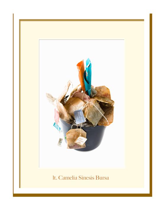 Jardin-Camelia-Sinesis-lt