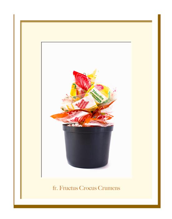 Jardin-Fructus-Crocus-fr
