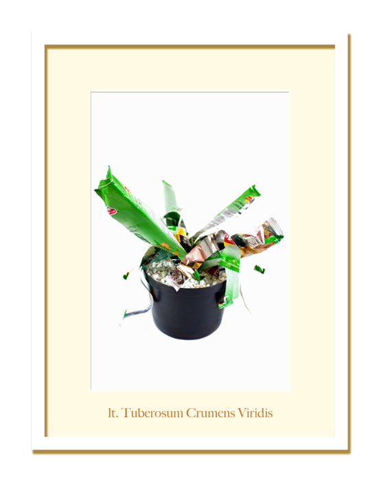 Jardin-Tuberosum-crumens-lt