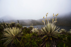 Jairo A Llano - fotografo paisaje-8863.jpg