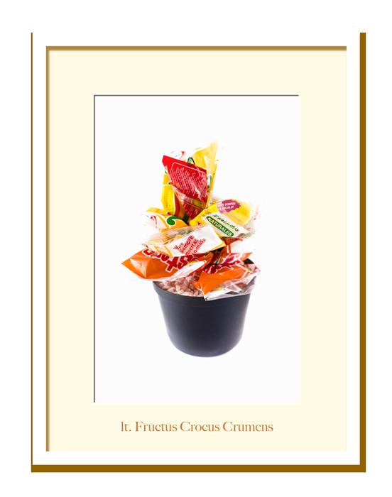 Jardin-Fructus-Crocus-lt