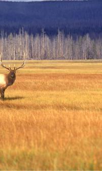 הפארק הלאומי ילוסטון  Yellowstone National Park