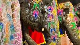 פסטיבל הפילים, הודו