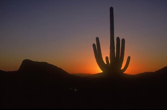 הפארק הלאומי סגווארו  Saguaro National