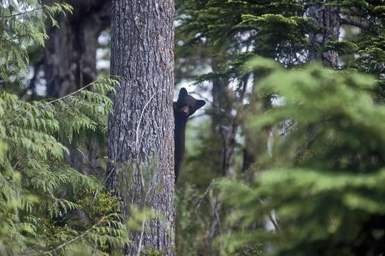 יערות קנדה