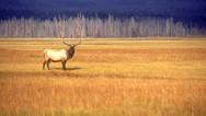 טבע ופארקים בצפון אמריקה