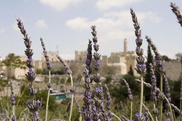 Israel_009.jpg