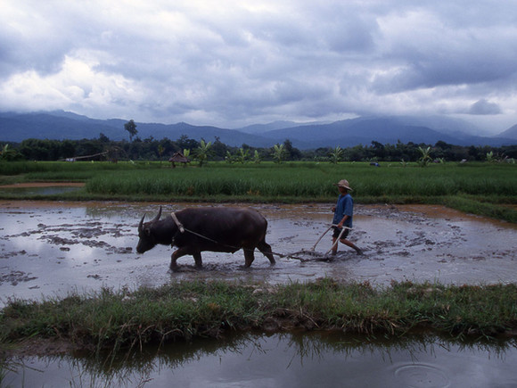 Thailand_154.jpg