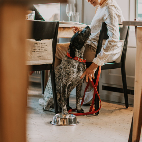 Gast mit Hund im Restaurant Libelle