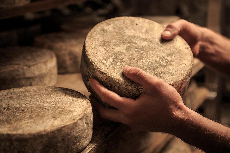 Jemand hält ein Laib Käse im Reifekeller in den Händen