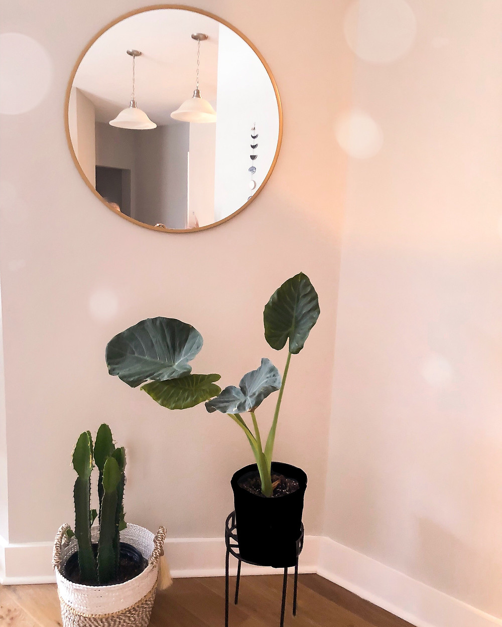 cactus and other plants with modern mirror hanging on the wall