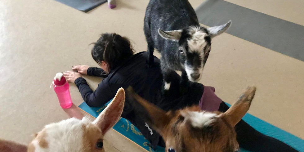 Goat Yoga - SOLD OUT