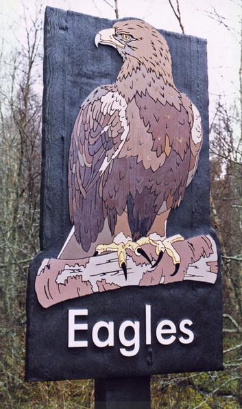 HWP Eagle whole.jpg