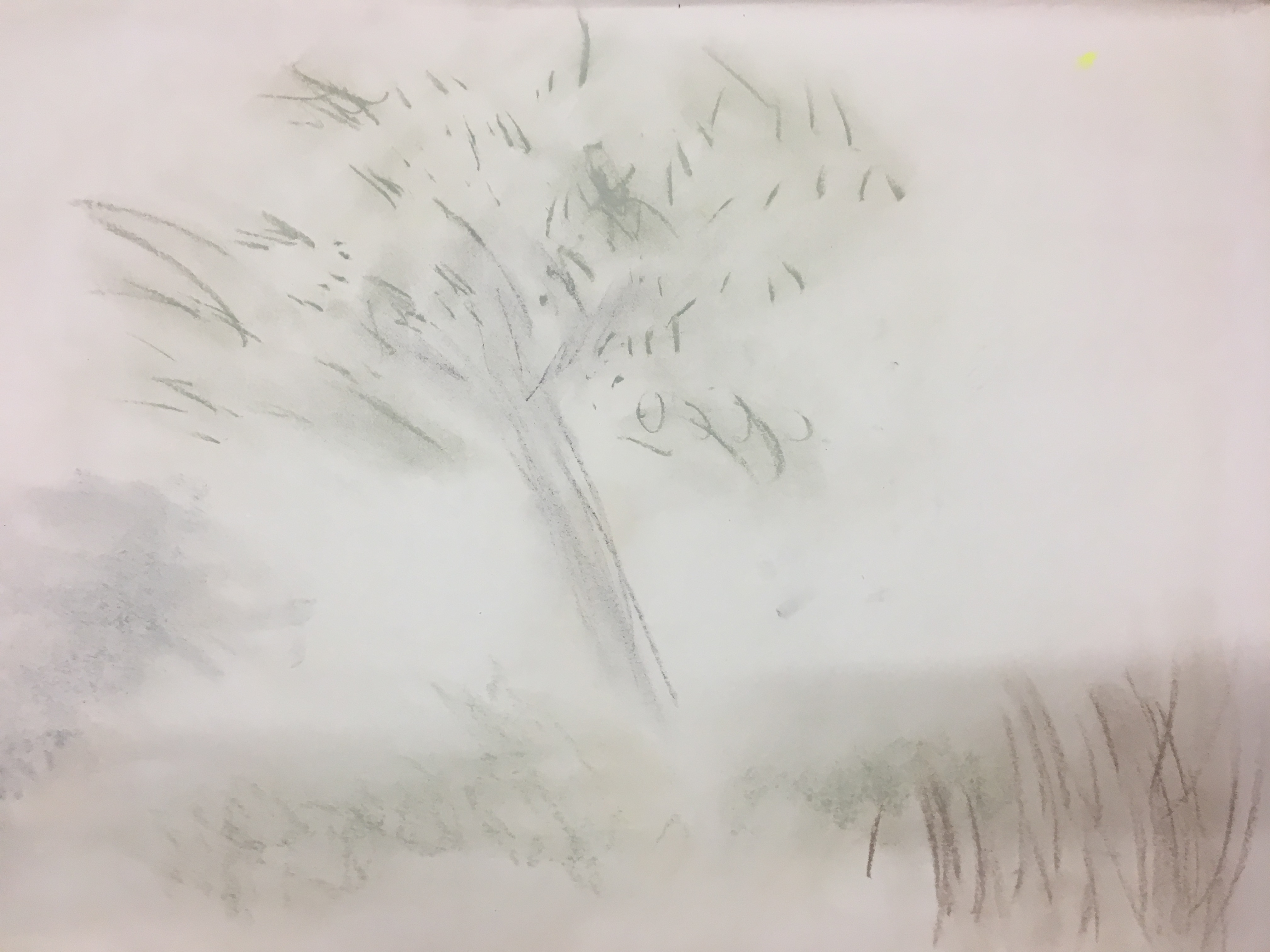 02. Tree in Courtyard, Justin Rumsby