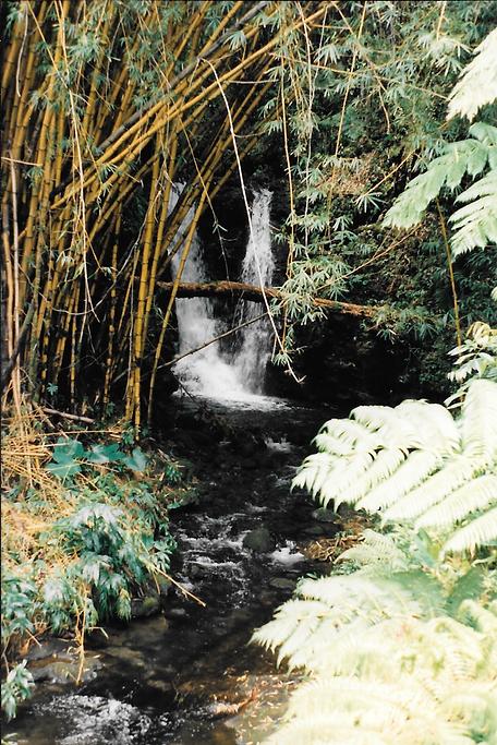 Waipio Valley Big Island Hawaii Pure Ingredients Nature Balanced Living