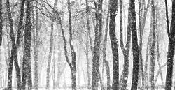 Les arbres enneigés Transparent