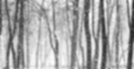 透明な雪に覆われた木