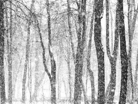Rain and Snow - Sue Starling