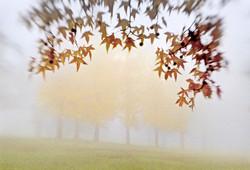 HP-LvsBukeyes-Fog-
