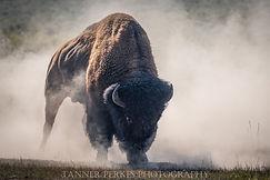 Final Bison (1 of 1).jpg
