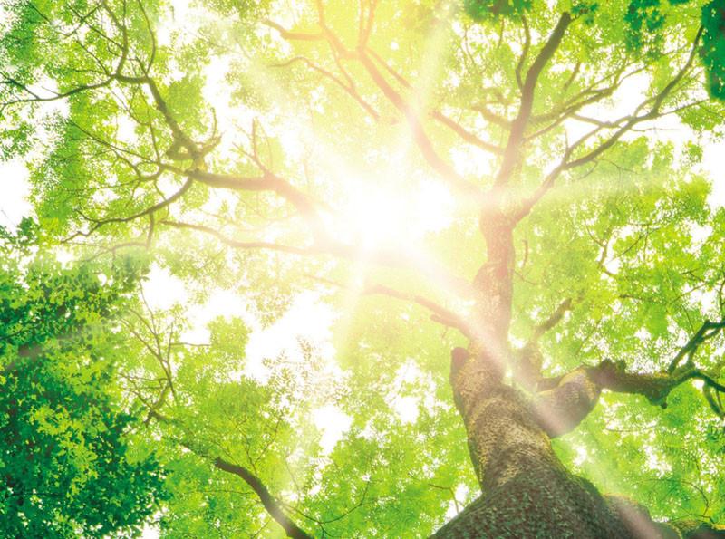 Tree of Life 1.jpg