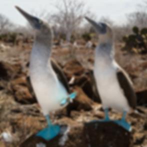 offers-galapagos-ecuador