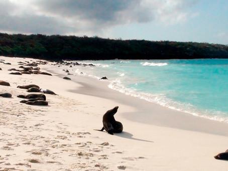Reforzarán controles para visitar las Islas Galápagos