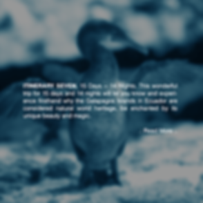 last-minute-galapagos