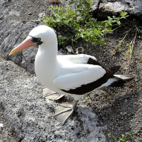 land-tours-galapagos