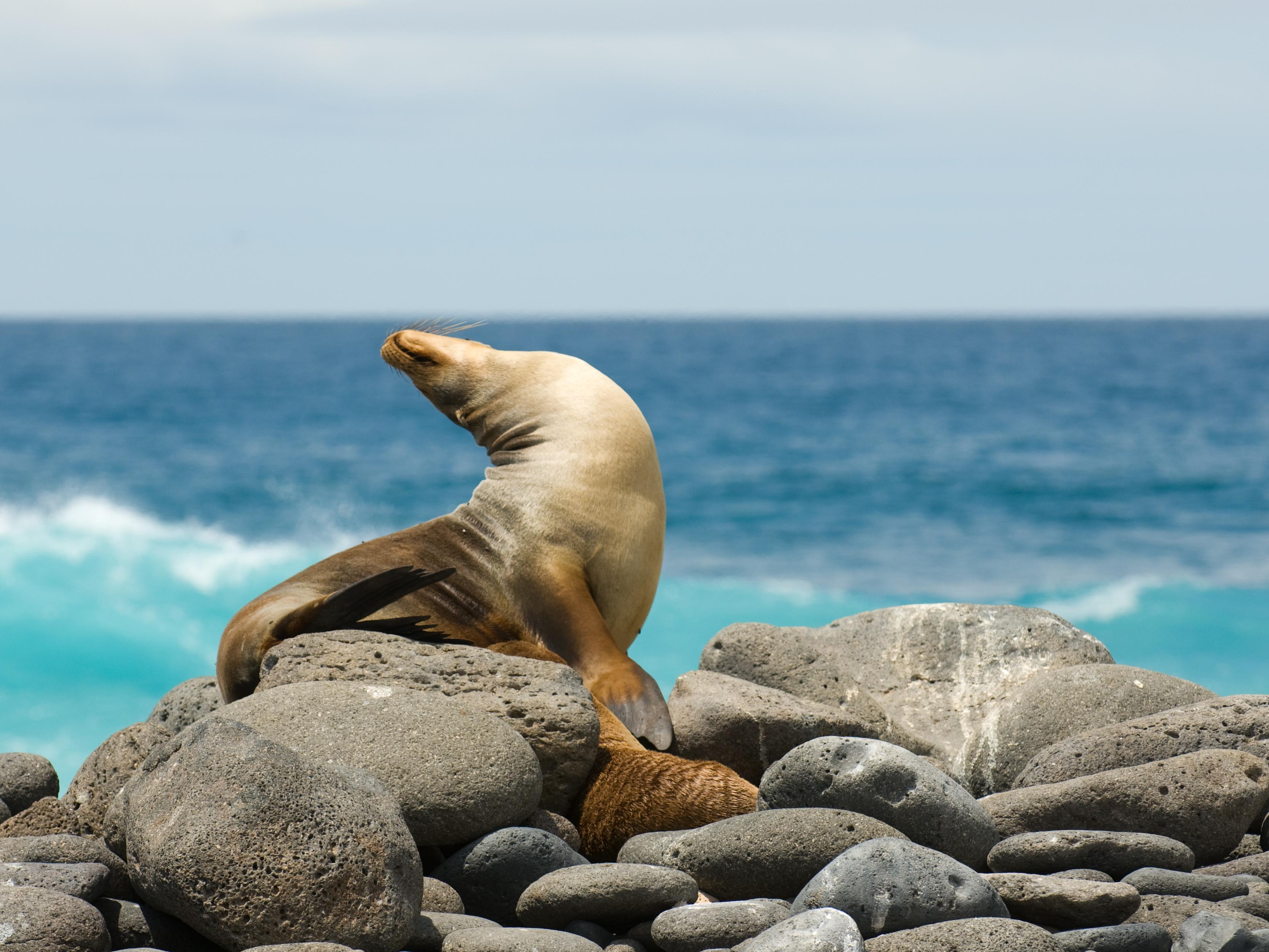 Galapagos Last Minute