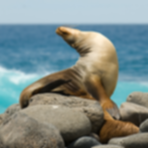 economic-galapagos-tours