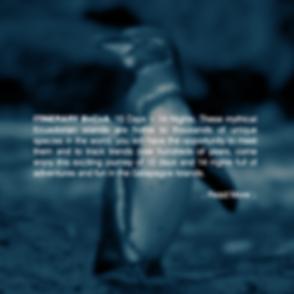 last-minute-galapagos-ecuador