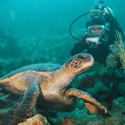 tortugas-y-buceo-just-travel-ecuador-turismo.jpg