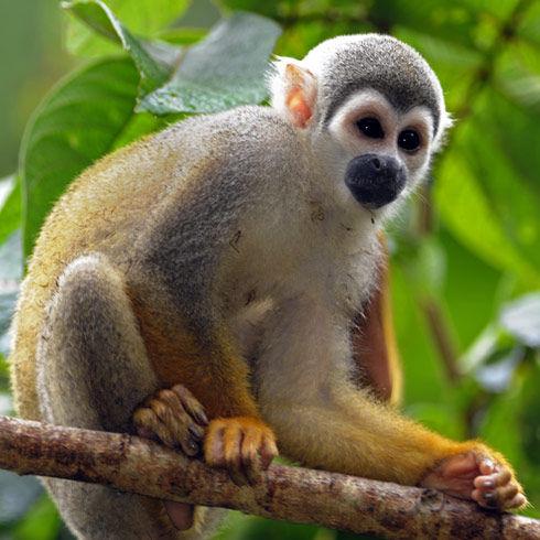 jungle-tours-ecuador