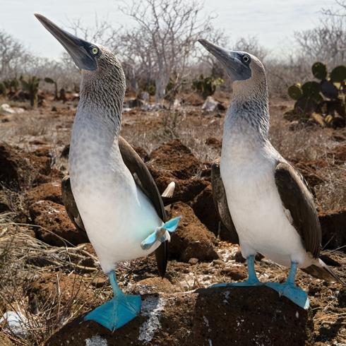 tours-galapagos