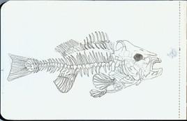 fishSketch_small.jpg