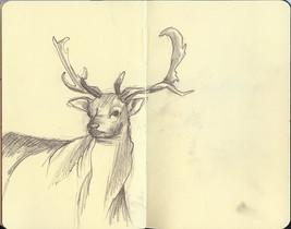 deer_small.jpg