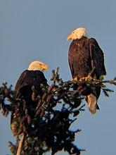 2 Eagles.jpg