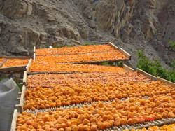 Mountain Fruits
