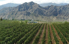Ningxia-vineyards.jpg