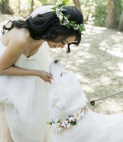 Bride_With_Pup