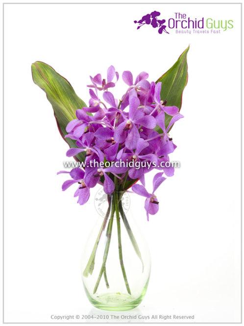Bouquet 3 Calypso Jumbo