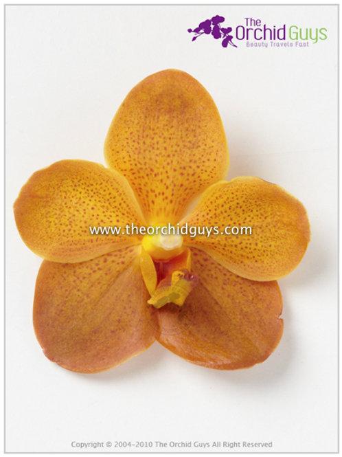 Chaphaya Gold