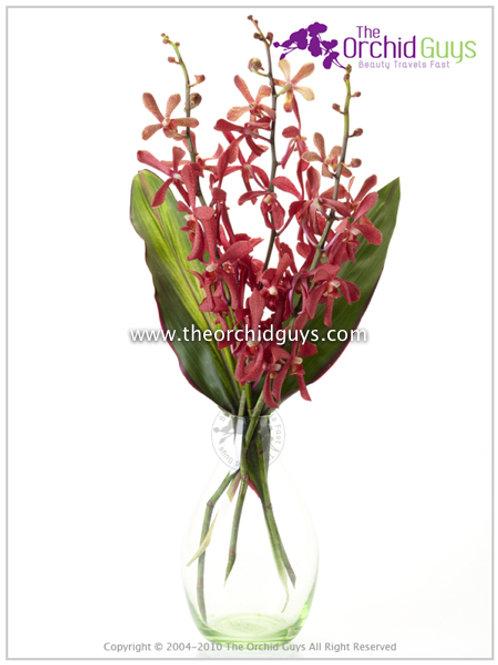 Bouquet 3 Anne Black