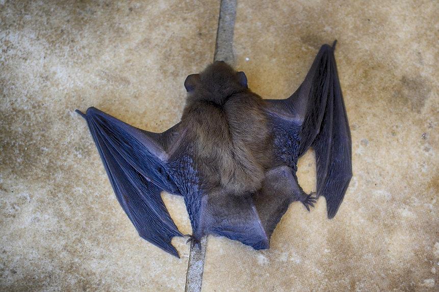 bat-3550461_1280.jpg