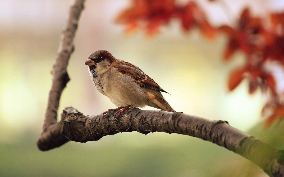 sparrow-9950_1920.jpg