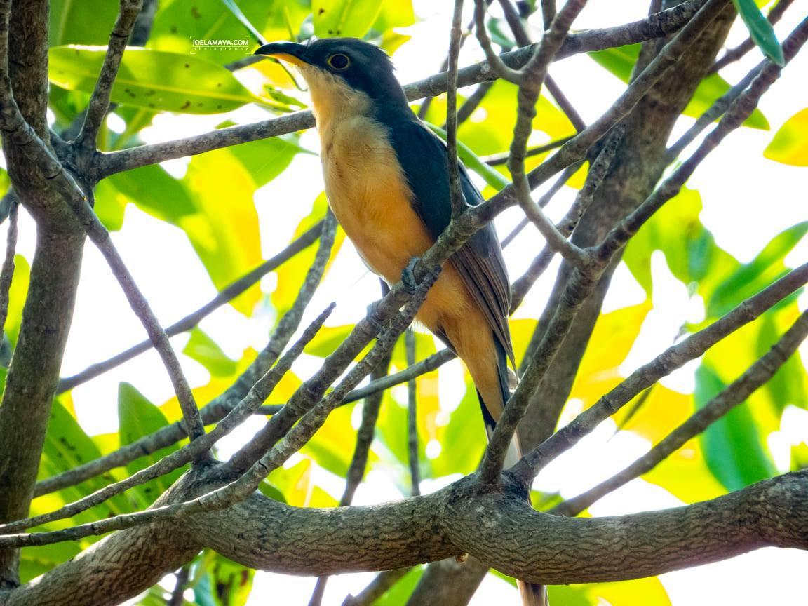 Birdwatching Port Royal